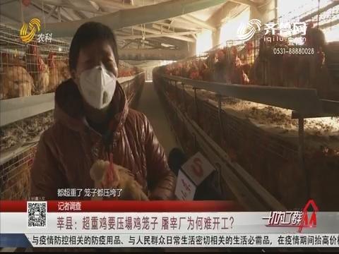 【记者调查】莘县:超重鸡要压塌鸡笼子 屠宰厂为何难开工?