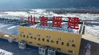 山东援青门源县冷水鱼繁育项目 填补高原鱼类养殖技术空白