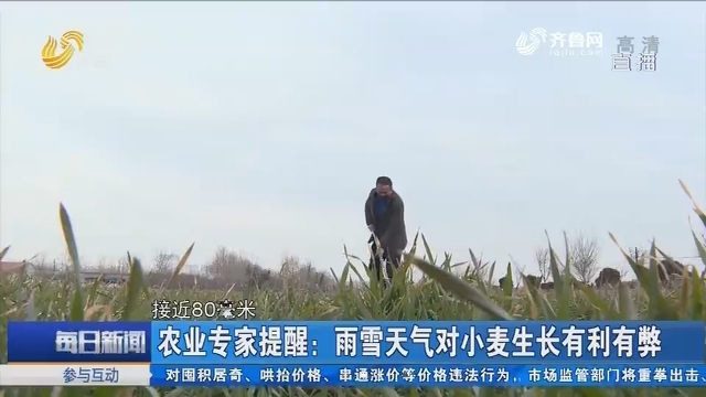 农业专家提醒:雨雪天气对小麦生长有利有弊