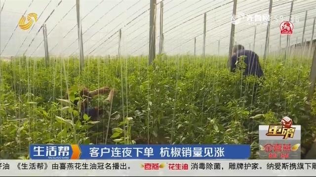 【重磅】潍坊:客户连夜下单 杭椒销量见涨