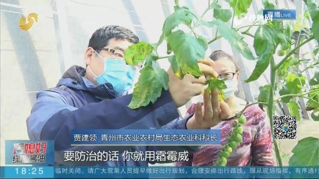 青州:田间地头上的课堂