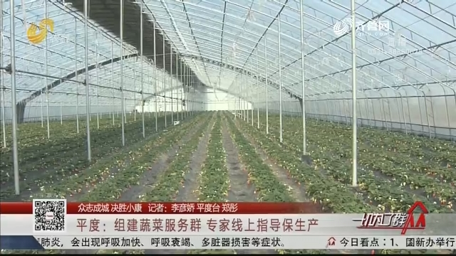 【众志成城 决胜小康】平度:组建蔬菜服务群 专家线上指导保生产