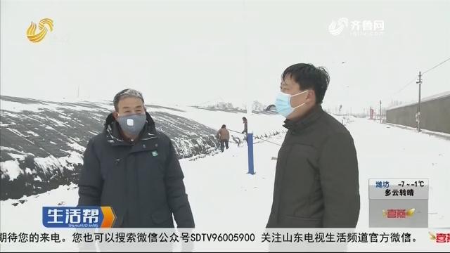 莱西:专家雪天登门 指导蔬菜大棚防灾