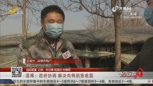 【追踪报道】淄博:政府协调 解决肉鸭销售难题