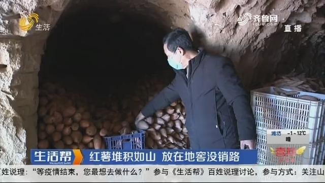 红薯堆积如山 放在地窖没销路