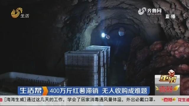 【重磅】淄博:400万斤红薯滞销 无人收购成难题