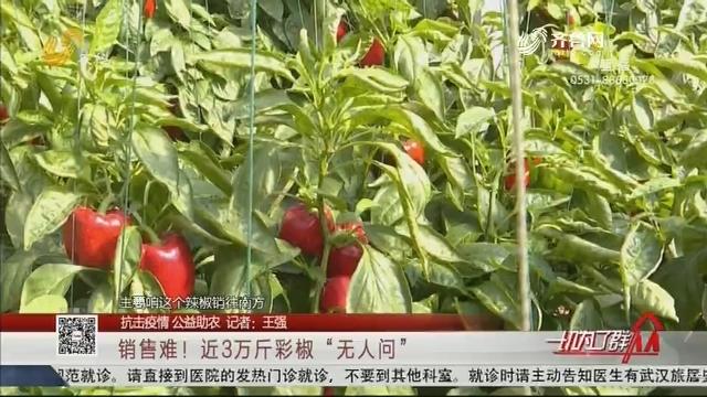 """【抗击疫情 公益助农】销售难!近3万斤彩椒""""无人问"""""""