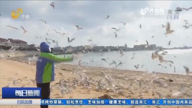 """疫情期间 青岛栈桥有一群海鸥""""保姆"""""""