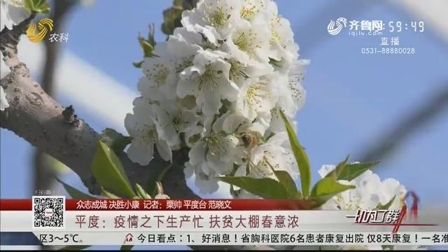 【众志成城 决胜小康】平度:疫情之下生产忙 扶贫大棚春意浓