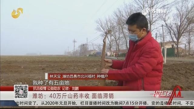 【抗击疫情 公益助农】潍坊:40万斤山药丰收 面临滞销