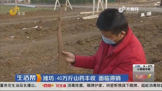 潍坊:40万斤山药丰收 面临滞销