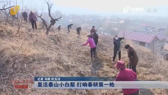 【众志成城 抗击疫情】复活泰山小白梨 打响春耕第一枪