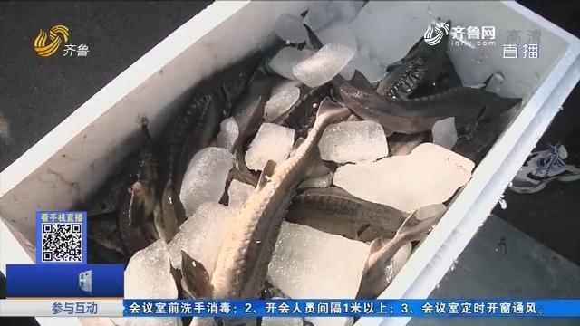 临朐村民自发捐赠7700斤鲟鱼 抵达黄冈