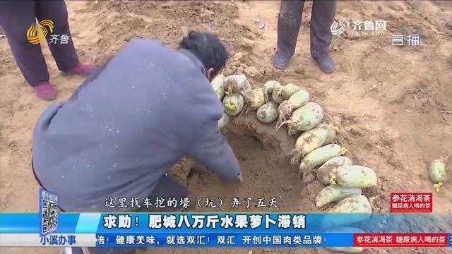 求助!肥城八万斤水果萝卜滞销