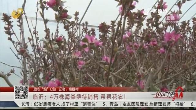 """【助农""""站""""C位】临沂:4万株海棠亟待销售 帮帮花农!"""