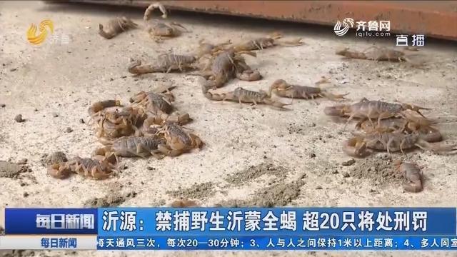 沂源:禁捕野生沂蒙全蝎 超20只将处刑罚