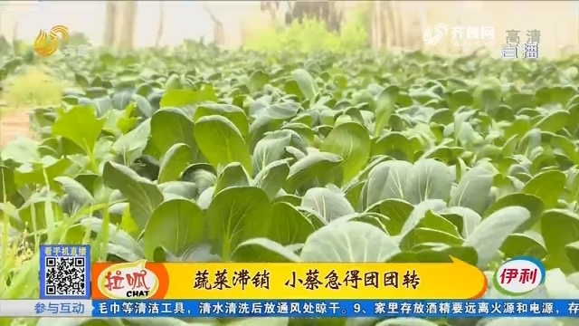 聊城:蔬菜滞销 小蔡急得团团转