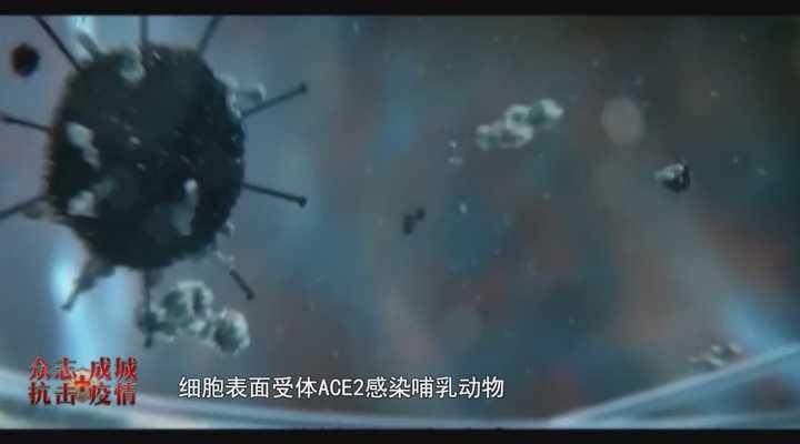 《民生实验室》:候鸟迁徙会携带传播新型冠状病毒,是真的吗?