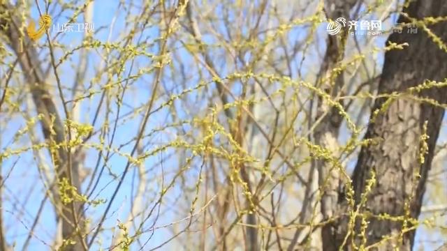 济南济西湿地:万物争春
