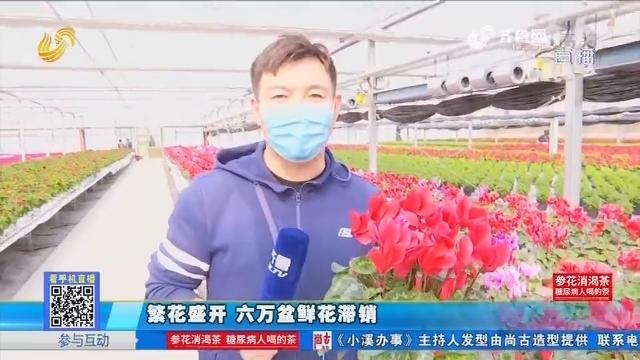 商河:繁花盛开 六万盆鲜花滞销