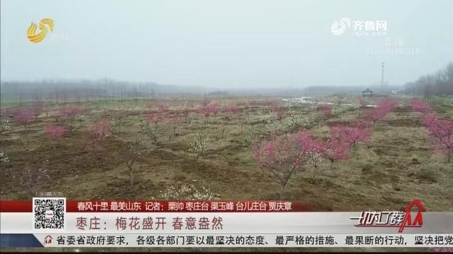 【春风十里 最美山东】枣庄:梅花盛开 春意盎然