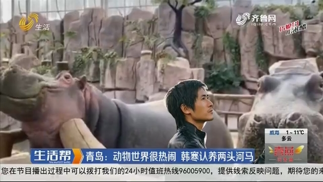 青岛:动物世界很热闹 韩寒认养两头河马