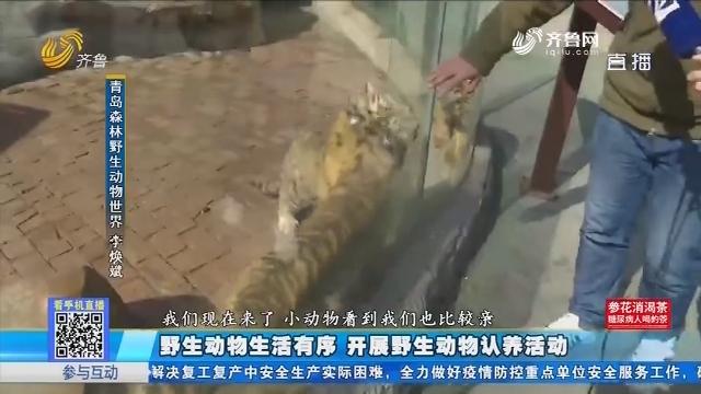 青岛:野生动物生活有序 开展野生动物认养活动