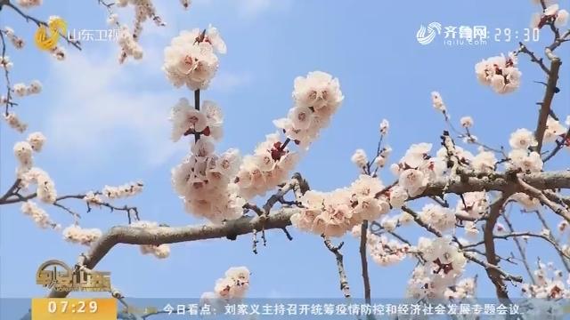 枣庄山亭:花开山水间 景色美如画