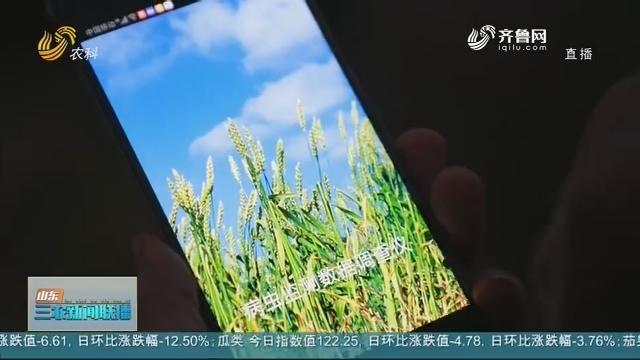 """【战疫情 促生产】东营:""""智慧""""装备让农业生产更高效"""