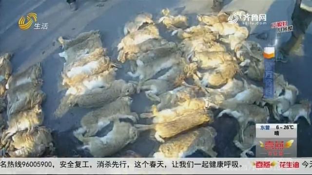 """青岛:鱼贩子""""不务正业"""" 非法出售野生动物"""