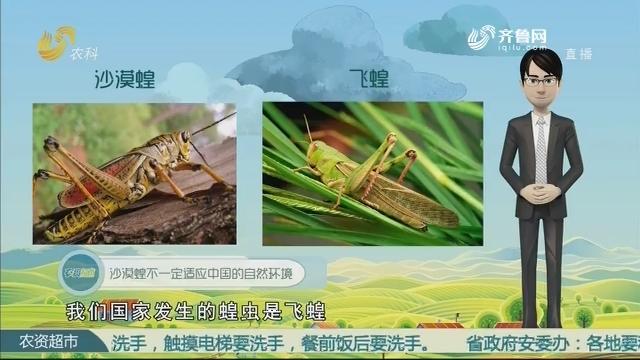 【当前农事·百家讲坛】沙漠蝗会来中国吗?
