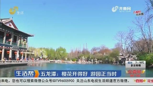 五龙潭:樱花开得好 游园正当时