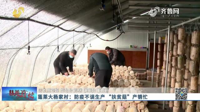 """慈善真情:蓬莱大杨家村 防疫不误生产""""扶贫菇""""产销忙"""