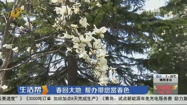 济南:春回大地 帮办带您赏春色