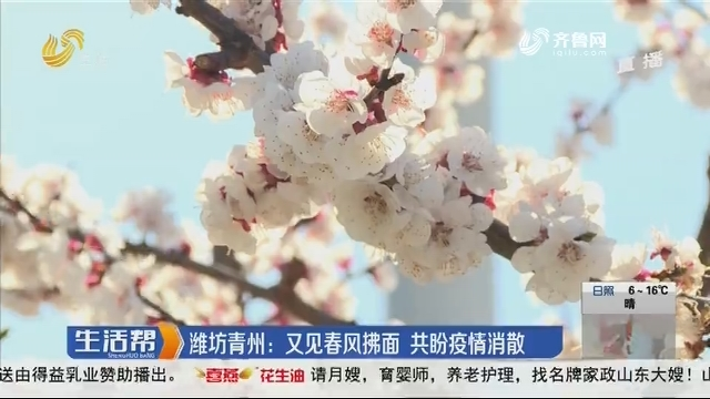 潍坊青州:又见春风拂面 共盼疫情消散