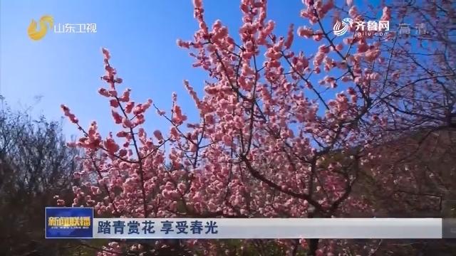 踏青赏花 享受春光
