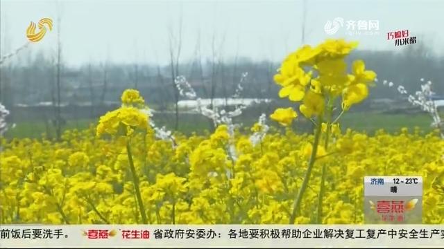 枣庄:百花盛开 春意浓