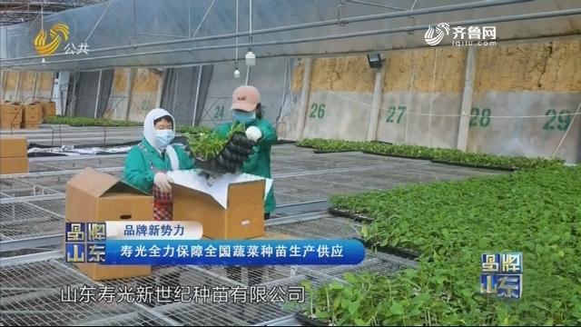 【品牌新势力】寿光全力保障全国蔬菜种苗生产供应