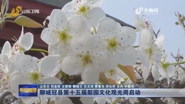 聊城冠县第十五届梨园文化观光周启动