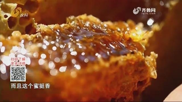 20200325《中国原产递》:全熟洋槐蜜