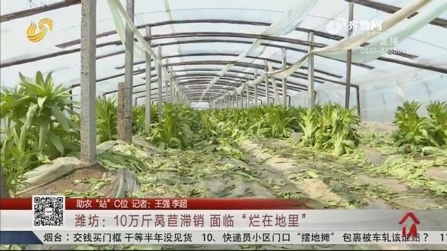 """【助农""""站""""C位】潍坊:10万斤莴苣滞销 面临""""烂在地里"""""""