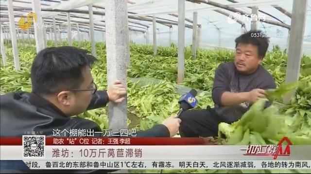"""【助农""""站""""C位】潍坊:10万斤莴苣滞销"""