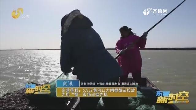 """东营垦利:6万斤黄河口大闸蟹苗投放为抢""""蟹""""市场占据先机"""