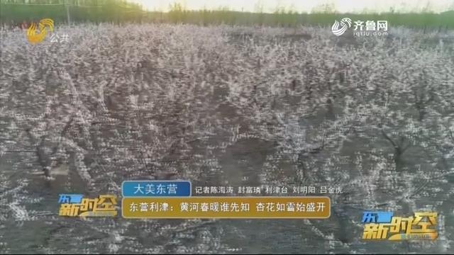 【大美东营】东营利津:黄河春暖谁先知 杏花如雪始盛开