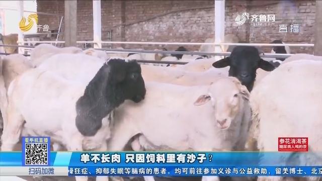 聊城:羊不长肉 只因饲料里有沙子?