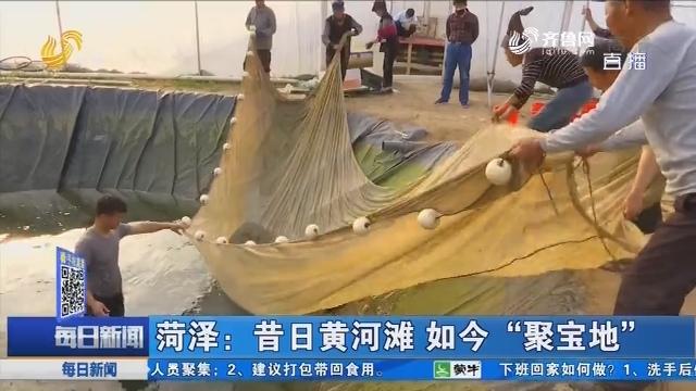"""菏泽:昔日黄河滩 如今""""聚宝地"""""""