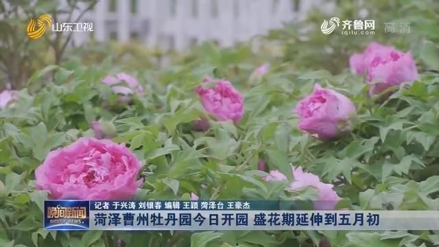 菏泽曹州牡丹园今日开园 盛花期延伸到五月初