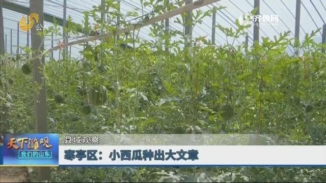 【县域观察】寒亭区:小西瓜种出大文章