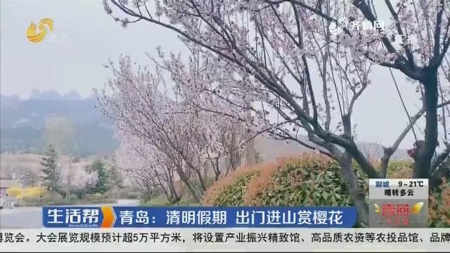 青岛:清明假期 出门进山赏樱花