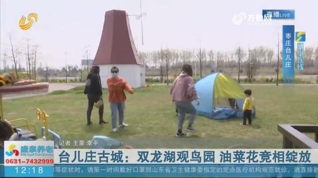 【闪电连线】台儿庄古城:双龙湖观鸟园 油菜花竞相绽放